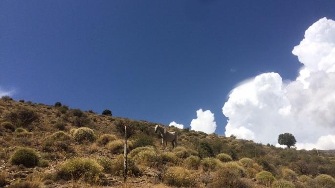 Wild horse, Trevélez