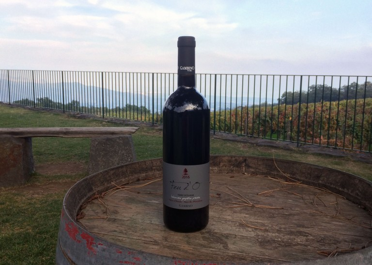 hazventuras-vendemmia-wine